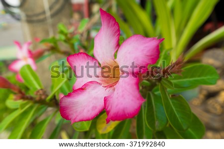 Beautiful pink flower closeup