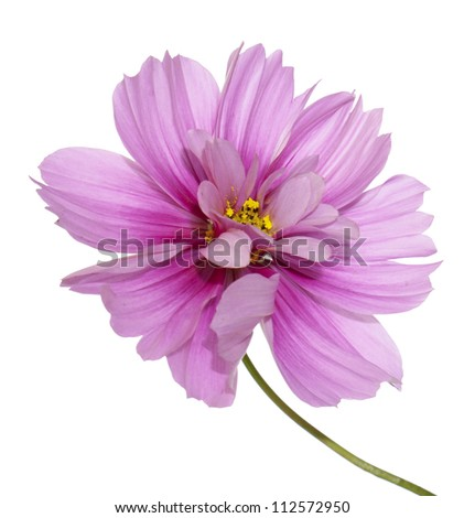 Beautiful pink flower over white background - stock photo
