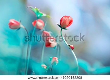 Artistic wallpaper stock images royalty free images vectors beautiful pink flowers anemones and ladybug in spring nature outdoors against blue sky macro mightylinksfo