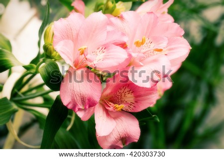 Beautiful pink flowers in the garden. - stock photo