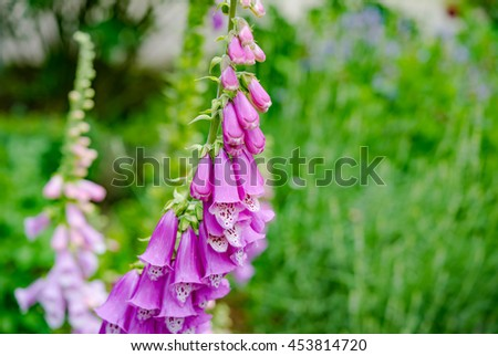 Beautiful pink flowers on natural background - stock photo