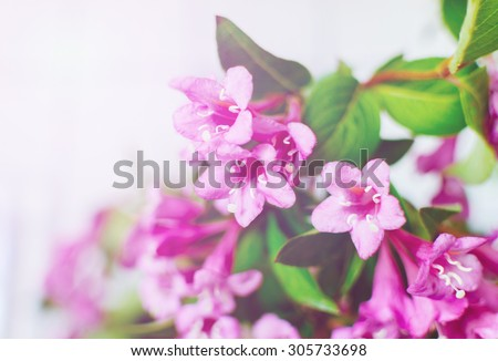 Beautiful pink flowers with soft light in summer time in the home - stock photo