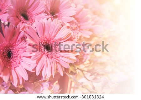 beautiful pink gerbera flowers in soft pastel style. Close Up with extremely shallow DOF. - stock photo