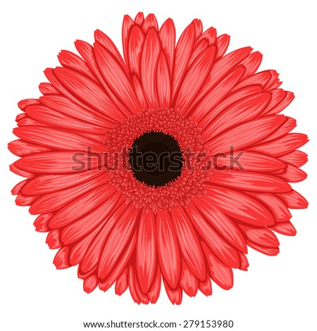 Beautiful pink gerbera isolated on white background . Hand-drawn with effect of drawing in watercolor - stock photo