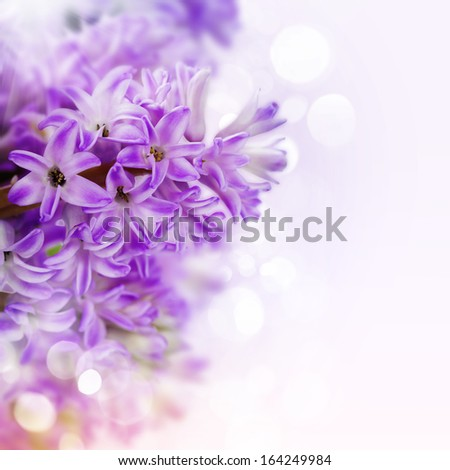 Beautiful Pink Hyacinths  over white(with easy removable sample text) - stock photo