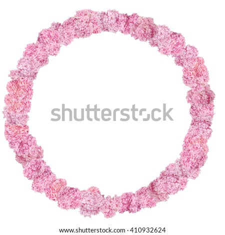 Beautiful Pink hydrangeas round flower. Frame in the shape of a circle. Natural color. Isolated on white - stock photo