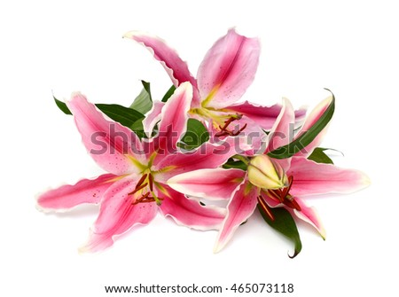 Beautiful pink lily flower bouquet isolated on white background