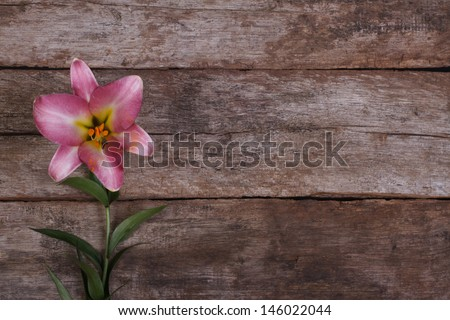Beautiful pink lily flower on the background of the old wooden board - stock photo