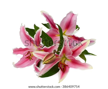 Beautiful pink lily flowers bouquet isolated on white background