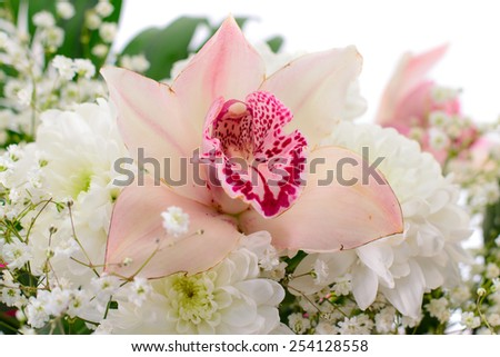 Beautiful Pink Lily Isolated on White Background - stock photo