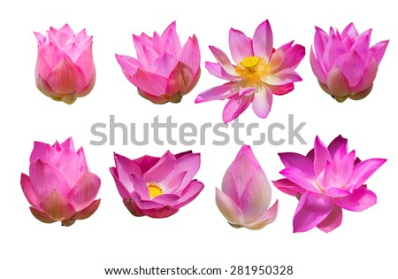 Beautiful pink lotus flower isolated on white - stock photo