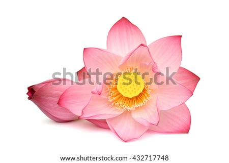 beautiful pink Lotus flowers isolated on white background - stock photo