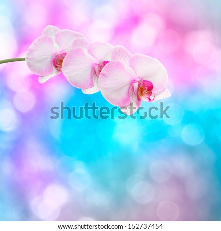 Beautiful pink orchid branch on an abstract background of a delicate - stock photo