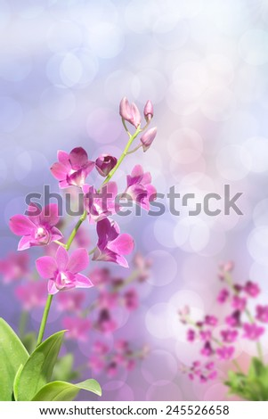 Beautiful pink orchid in green tropical forest bokeh