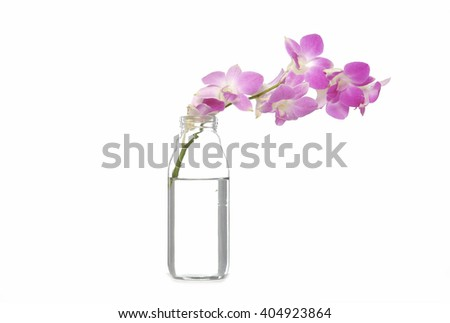 Beautiful pink orchids in vase - stock photo