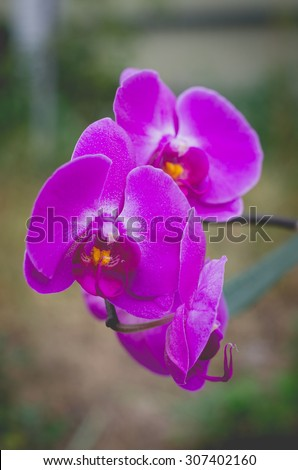 Beautiful pink orchids on a branch - stock photo