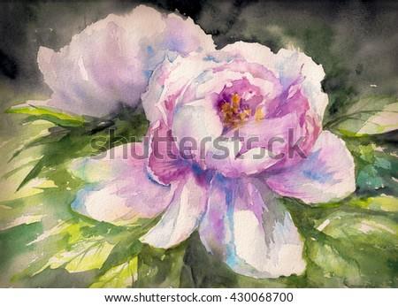 Beautiful pink Peony flowers, Watercolor painting  - stock photo