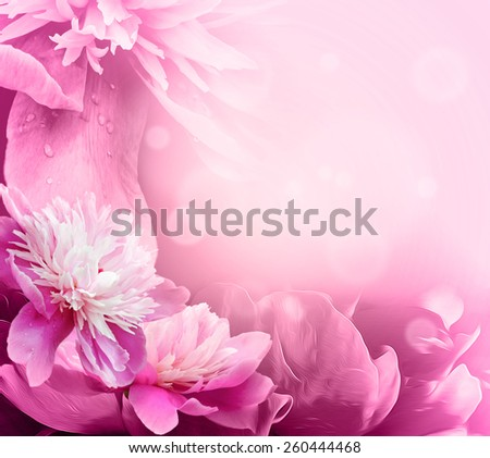 Beautiful Pink Peony in a garden. Shallow dept of field for soft, artistic look. - stock photo