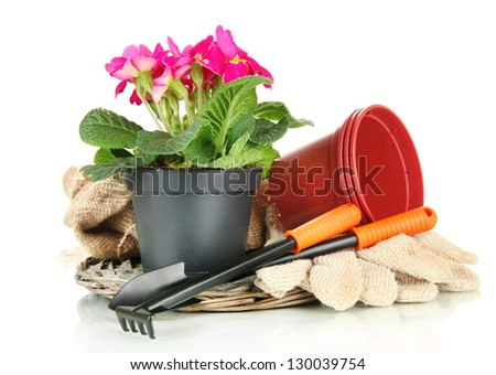 Beautiful pink primula in flowerpot and gardening tools, isolated on white - stock photo