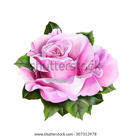 Beautiful pink rose with leaves close up isolated on white background, watercolor, illustration - stock photo