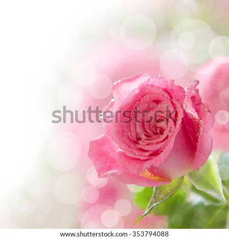 Beautiful pink rose with water drops, copy space - stock photo