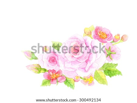 beautiful pink roses isolated on white background. flowers watercolor painting. floral illustrations concept. - stock photo