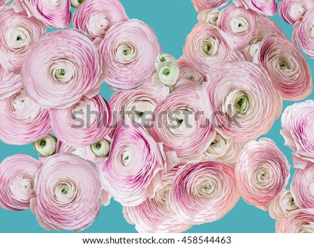 Beautiful pink roses on blue background