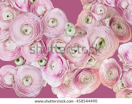 Beautiful pink roses on pink background - stock photo