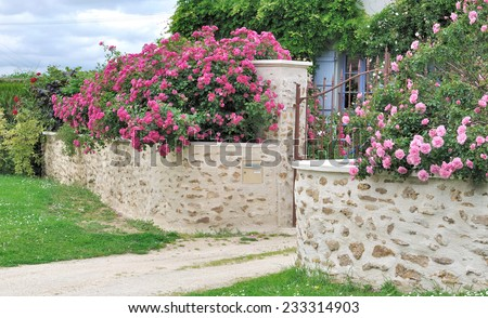 beautiful pink  roses over a stone wall
