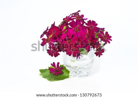 Beautiful pink spring bouquet in vase. Cineraria