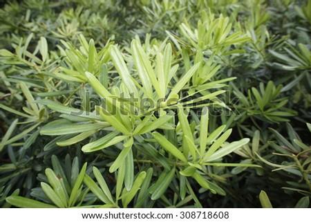 beautiful plant - stock photo