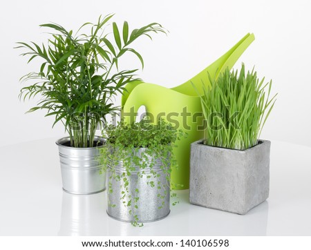 Beautiful plants and green watering can, on white background. - stock photo