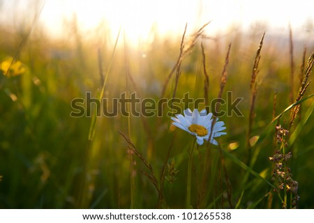 beautiful plants in a field at sunset - stock photo