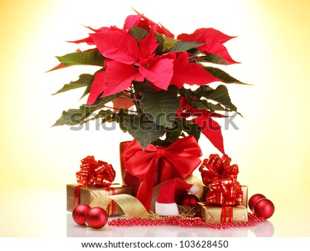beautiful poinsettia in flowerpot, New Year's balls and gifts on yellow background