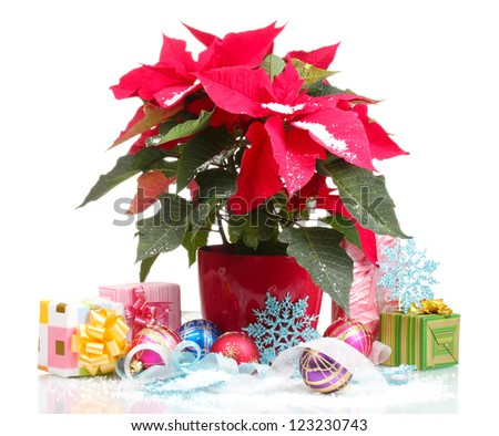 Beautiful poinsettia with christmas balls and presents isolated on white
