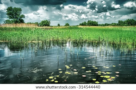 Beautiful pond landscape, amazing view of many different water-plant in the lake, beauty of wonderful nature of Eastern Europe, Ukraine - stock photo
