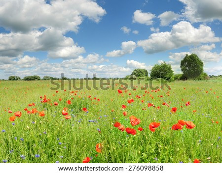 Beautiful poppies scenic landscape with blue sky - stock photo