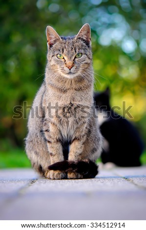 Beautiful portrait of a cat sitting in city - stock photo