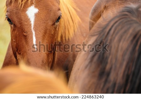 Beautiful Portrait of a horse. Traveling Argentina. - stock photo