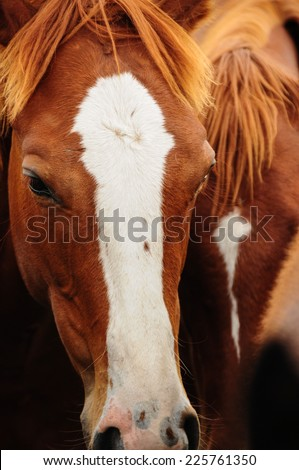 Beautiful Portrait of a horse. Traveling Argentina.