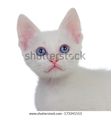 Beautiful portrait of a kitten with blue eyes isolated on white background