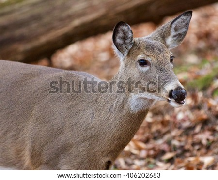 Beautiful portrait of the cute wild deer in the forest