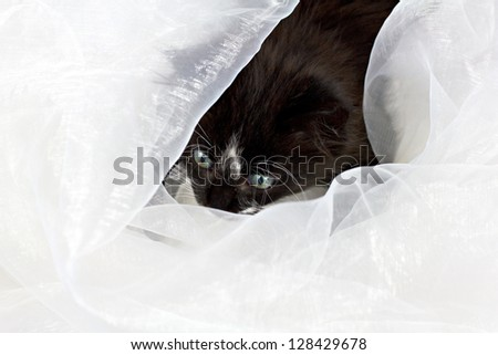 Beautiful pretty cute kitten looking through white fabric - stock photo