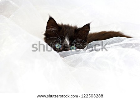 Beautiful pretty cute kitten lying down, peeping over white fabric - stock photo