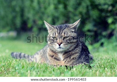 Beautiful proud cat in the garden