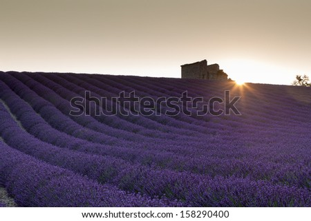 Beautiful provence countryside during sunrise - stock photo