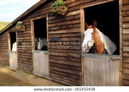Beautiful purebred horses in the barn door  - stock photo