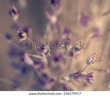 Beautiful purple dry flower bouquet in soft summer colors