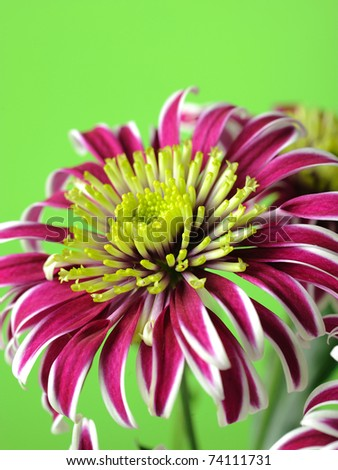 Beautiful purple flower over light green background - stock photo