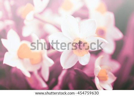 Beautiful purple flowers. Image with bright summer color filters, sweet color flowers in soft color and blur style on mulberry texture background - stock photo